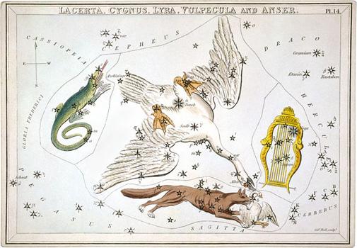 La constellation du Cygne représentée dans l'Urania's Mirror, par Sidney Hall